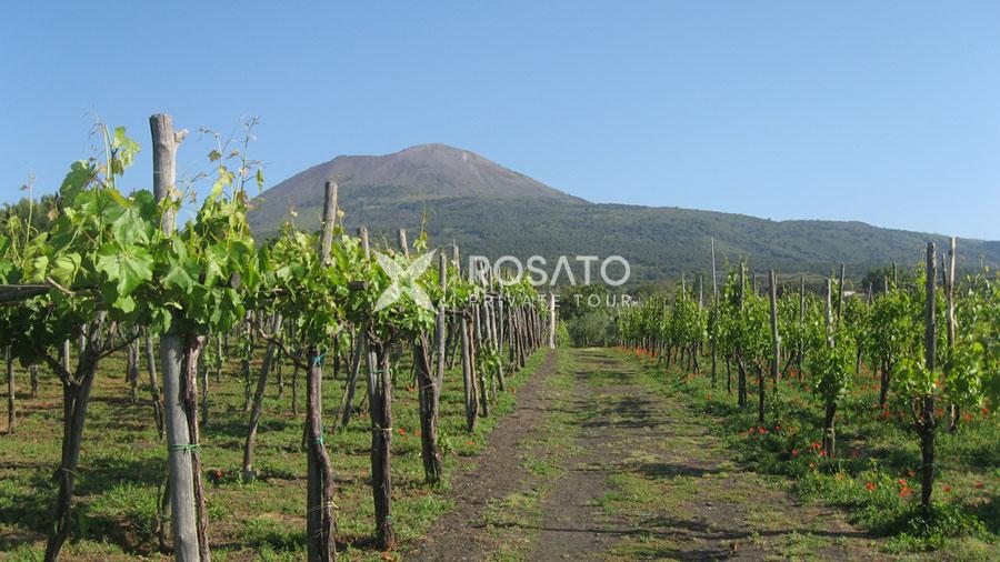 Vesuvius wine tasting